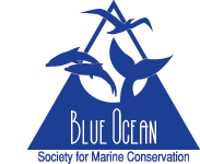 blueoceanlogo-8