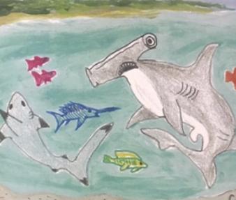 cad saves sharks-1